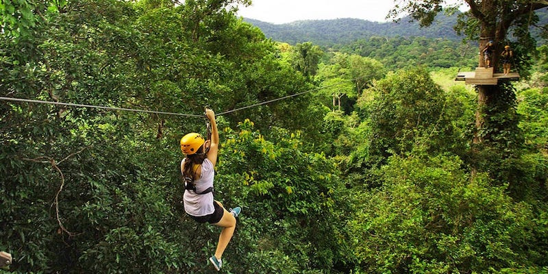 flight of the gibbon (chiang mai)